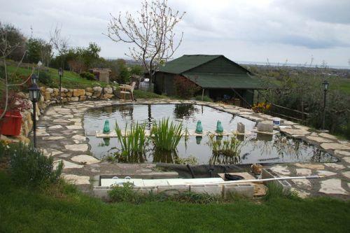 Allevamento koi giapponesi e laghetti koi giardino for Laghetti ornamentali da giardino