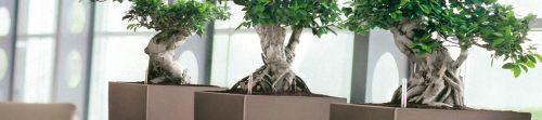 Hw style linfa vitale per il tuo ufficio casa giardino for Arredo ufficio bari